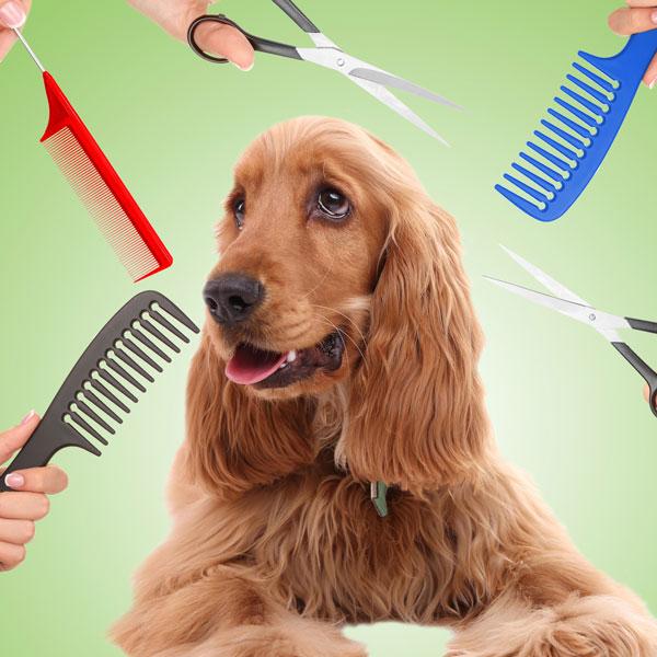 kako i gde osisati psa
