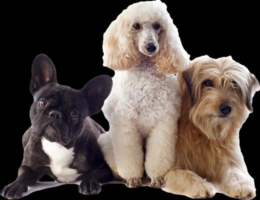 profesionalno osisani psi